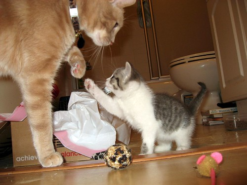 cute cat and kitten friendship pic