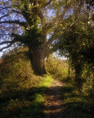 Old Oak (Tim.Haughton) Tags: england sussex oak arundel