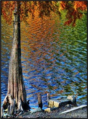colored reflection [HDR] (silviaON) Tags: november blue autumn orange lake reflection tree green nature water colors yellow germany see europe view herbst 2006 duisburg baum hdr aclass iloveit photomatix 250v10f abigfave