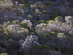 Ile de la Reunion (Z Eduardo...) Tags: travel trees nature island flora indian ile viagem arbre indic indien runion le specnature