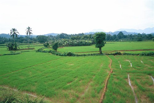 ratnapura (106)