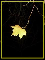 dernire feuille (francois et fier de l'tre) Tags: automne frenchpoetry feuilles feuille kiss2 kiss3 kiss1 kiss4 francoisetfier abigfave