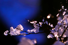 precious (♫ marc_l'esperance) Tags: christmas xmas november blue winter light sky snow tree ice nature vancouver canon eos japanese reflecting maple melting shiny crystals branch crystal bokeh quality © 2006 momiji zen 10d reflective lookatme melt nocrop uncropped allrightsreserved formations cml glittering canonef70200mmf28lusm ef70200mmf28l canon70200f28l magicdonkey instantfave outstandingshots abigfave aplusphoto atoosapick
