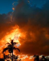 Sunset Nov 28, 2006 Coral Springs FL (bdec) Tags: sunset red tree clouds dark brian palm fireinthesky firey lichtspiel specnature spselection challengeyouwinner abigfave briandecarmo anawesomeshot potwkkc14 aplusphoto 3wayassignment21 decarmo
