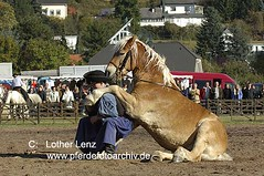 _LE27546 (Lothar Lenz) Tags: horse caballo cheval cavallo cavalo pferd hest equus paard sitzen hst hestur konj hobu zirgs zirkuslektionen lotharlenz zirkuslektion showreiten ernszakal