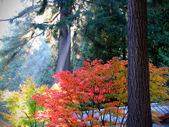 Japanese Gardens Sunbeam (Gigapic) Tags: usa gardens oregon garden portland japanese unitedstates superhearts