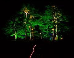 Westonbirt Enchantment VI (ye sons of art) Tags: christmas xmas trees lights illuminations gloucestershire england uk forestrycommission winter westonbirt