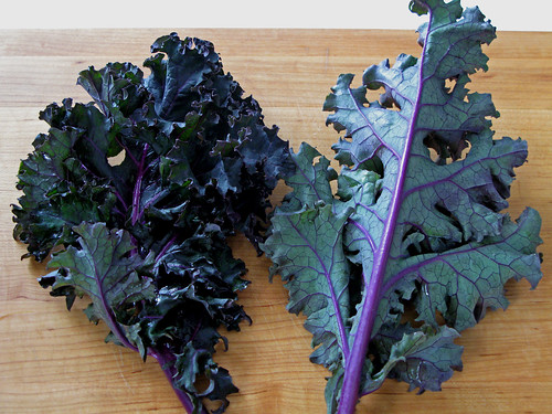 Root Source: Kale