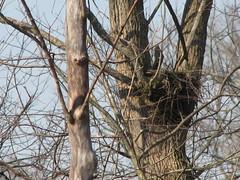 Paxton nest