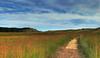 just keep walking... (richietown) Tags: beach topf25 field grass topv111 clouds canon interestingness topv555 topv333 capecod dunes topv1111 stock topv999 hike explore trail getty topv777 hdr 28135mm nationalseashore greatisland 3xp canon30d richietown