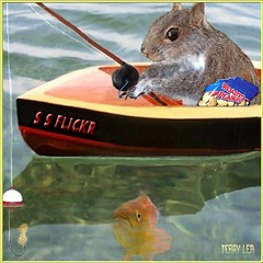 Squirrel fishin' (Terry_Lea) Tags: fishing squirrel squirrels peanuts animation gif roasted wrongbait