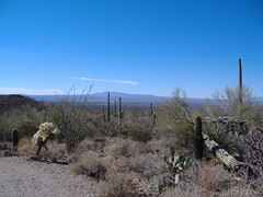 Sonora Desert,Tucson, Arizona (eeyore72200) Tags: bestnaturetnc06