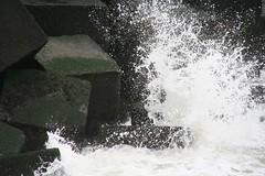 20061008_0105 (dejuffies) Tags: meeuwen kraai