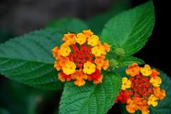 Flower in street corner (dukeharumi) Tags: flower color beauty insect pretty walk streetcorner healing stroll loveliness