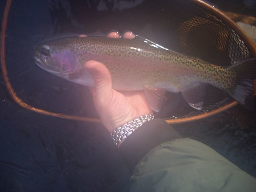 Gunpowder River Bright Bow