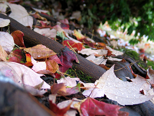 Autumn leaves at the base of a tree