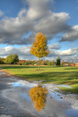 Reflection (jason_minahan) Tags: autumn reflection tree newjersey nj princeton hdr mercercounty xti