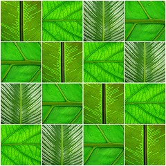 leaf patchwork (*omnia*) Tags: green leaves lines collage leaf mosaic gadgetgirl fdsflickrtoyrs