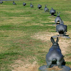 """12 Rabbits of The Lake Shinji-ko"" (from the back) - by weblog244"