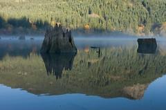 Cedar River (sunrisesoup) Tags: morning usa reflection fall fog washington cascades stump cascademountains cedarriver cedarriverwatershed