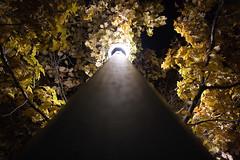 Photoroll (austinspace) Tags: park night spokane downtown riverfront riverfrontpark photoroll spokanephotoroll