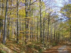 Herbst im Wienerwald (ernst_raser) Tags: autumn nature automne woods herbst fourseasons wald wienerwald viennawoods schpfl