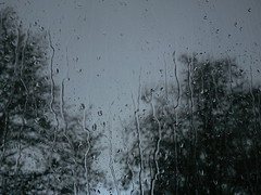 "Rain, rain.../""Rain Please Go Away"" (Kym.) Tags: autumn trees storm window rain dark grey lyrics song gray unionstation alisonkrauss photoslyrics samesamebutdifferent rainpleasegoaway"