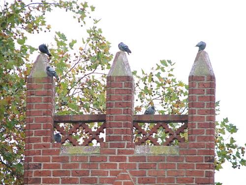 Tauben-auslese