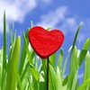 When love springs....... (cattycamehome) Tags: uk blue autumn winter red summer england sky stilllife colour macro green fall love grass tag3 taggedout clouds season happy hope spring tag2 tag1 seasons heart bright quote quality derbyshire sunny cheerful accept acceptance gibran catherineingram november2006 abigfave cattycamehome allrightsreserved© howwearenow