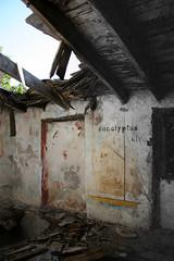 Fiume del tempo (Dike Inside) Tags: italy tree blackwhite italia selectivecolour zoagli