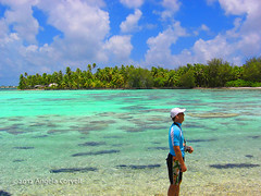 Bora Bora (firefly242) Tags: vacation beach pool swimming polynesia islands paradise lagoon southpacific beaches tropical tropicalislands tahiti resorts tropics borabora lemeridien tropicalparadise frenchpolynesia exoticvacation exoticholiday boraboralagoon lagoonarium lemeridienborabora polynesiefrançais exoticresorts
