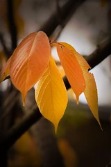 autumn-colors-5 (swifty_mcvey) Tags: autumn winter color london ice water leaves warm colours freezing warmcolor warmcolours hardkohr neilrobinson