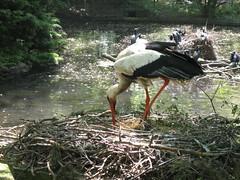 Adebar (Mojo Jojo) Tags: zoo zoom oberhausen storch
