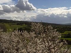 Primavera, ritorna... (Stranju) Tags: sardegna italy italia sardinia cielo fiori terra paesaggi campidano marmilla stranju pianche sarerranostra