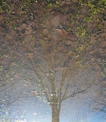 Tree with leaves (leesure) Tags: deleteme5 deleteme8 deleteme deleteme2 deleteme3 deleteme4 deleteme6 deleteme9 deleteme7 saveme4 saveme saveme2 saveme3 deleteme10