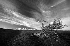broken tree (Ray Byrne) Tags: sky blackandwhite bw tree broken field clouds wow landscape north monotone alnwick northumberland canon350d northeast snapped landscapephotography raybyrne rugley byrneoutcouk webnorthcouk