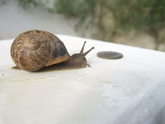 Snail looking for money