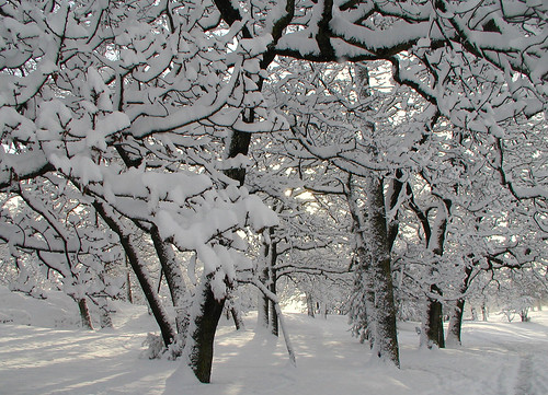 Topaz Park as Winter Wonderland