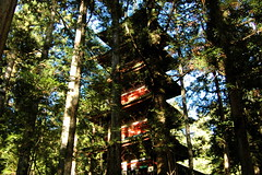 (angie.star) Tags: tree japan forest temple pagoda  nikko