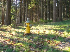 The loneliest fire hydrant (greendrz) Tags: yellow forest hydrant canon woods maine hike firehydrant baxter outofplace 800 cognitivedissonance elph incongruous mackworthisland cascobay sd700 sd700is canonpowershotsd700is canonsd700is greendrzint greendrz sd700ixus