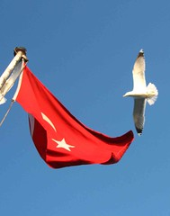 Freedom (derya_t) Tags: blue red turkey island freedom islands flag seagull trkiye istanbul trkei turkishflag turkish redwhiteblue princessislands bykada