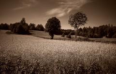 Late summer (Krogen) Tags: bw nature norway landscape norge blackwhite natur norwegen olympus c7070 noruega scandinavia akershus romerike krogen landskap noorwegen noreg borgen ullensaker skandinavia photomatix