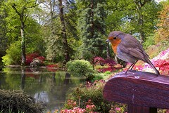 The-Robin-Returns (mix's) Tags: camera autumn trees winter red wild summer colour bird fall nature colors leaves birds animal animals digital photoshop garden season photo spring mix colours photographer seasons nest time erithacusrubecula pentax wildlife postcard year birding hampshire sd card springs brest postcards dp years southampton period photoart digitalphoto istds winters digitalimage summers periods birdwatcher theworld pentaxistds sdcard digitalphotograph digitalimaging twitcher oneworld birdwatchers abw twitchers exbury mixs exburygardens specnature abigfave viewtheworld timeofyear impressedbeauty superaplus aplusphoto redbrest autunms bachspicsgallery