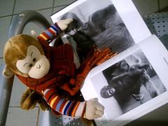 Monkey reading (crazyangelblue) Tags: mall monkey badge monkeybag