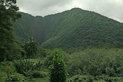 IMG_4842 (Limus A) Tags: hawaii waipio