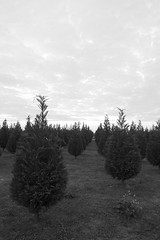 Death Will Be Swift (jhary) Tags: byron xmas bw georgia november2006 birthday treefarm trees xmas2006 outside landscape blackwhite