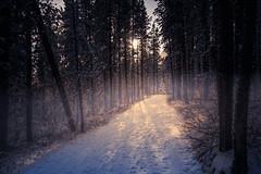 Snow Trees in Fog (Bluesky251) Tags: fog snow trail sunny silent beautiful footprint trees white walking sunlight skyline