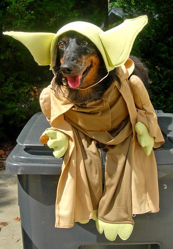 Junk Yard Yoda