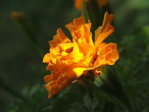La flor naranja