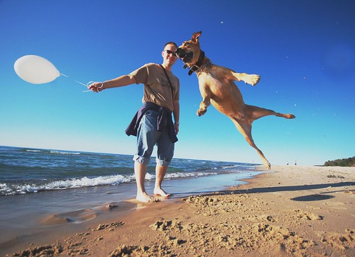 My dog can fly
